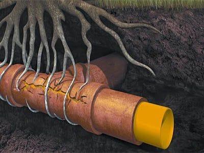 Racine bouche un egout et ne cherche pas eau 400x300 - Comment déboucher une canalisation d'égout